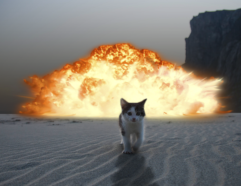 All sizes Cat on Beach walking away from Explosion