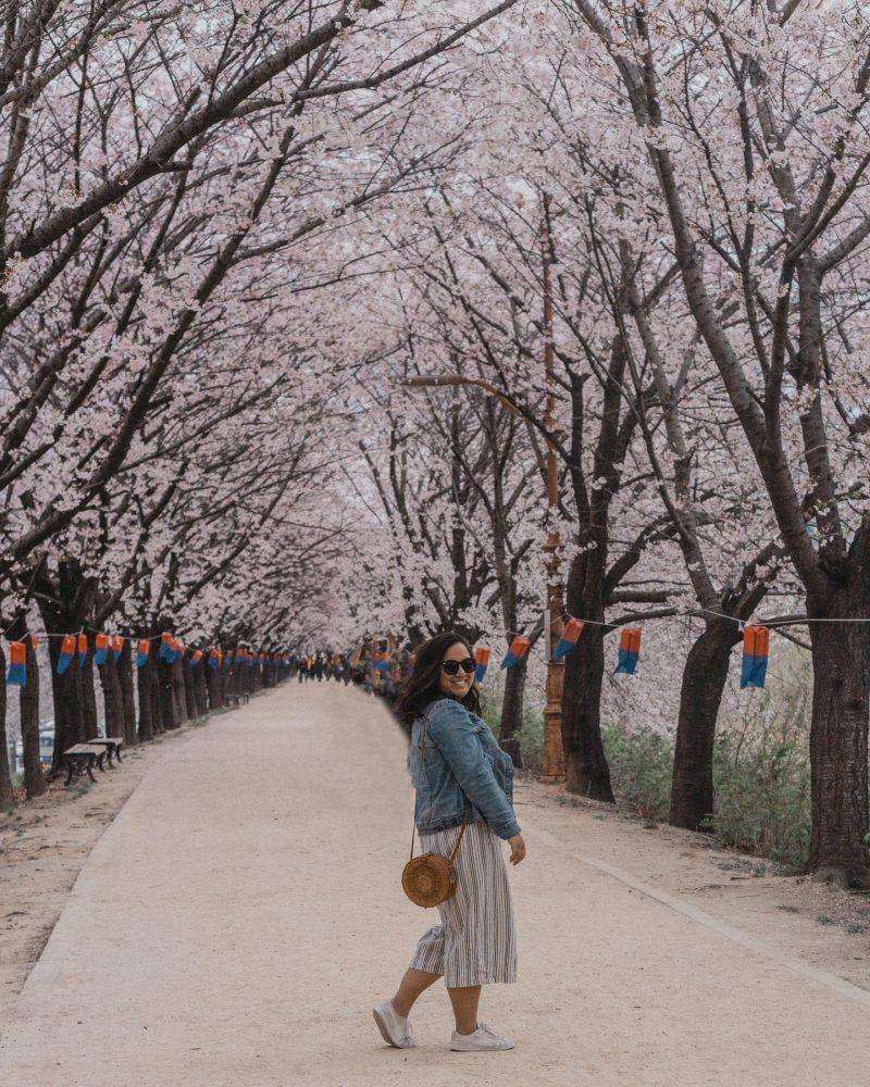 Cherry Blossoms Korea 2021 A Forecast Guide Where To Go Cherry Blossom Where To Go Korea Travel