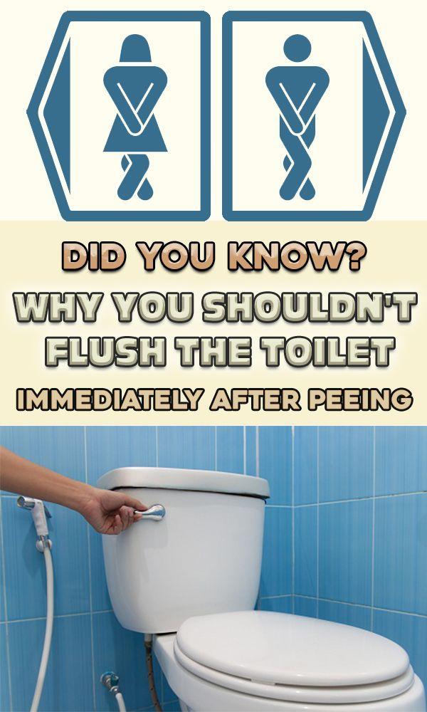 Bathroom peeing potty toilet why