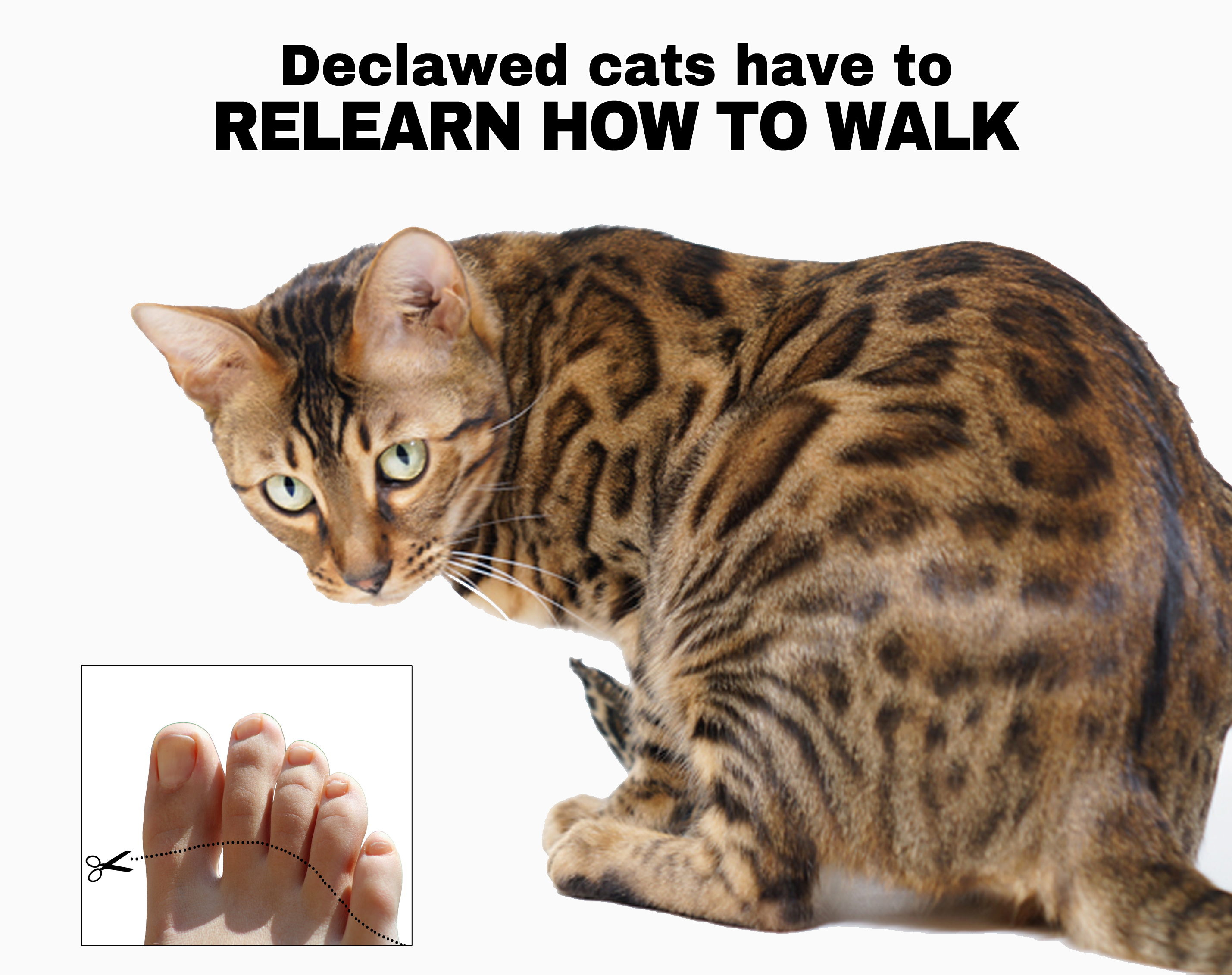 8 Reasons Why You Should Never Declaw Your Cats Peta Declawing Cats Cats Animal Companions