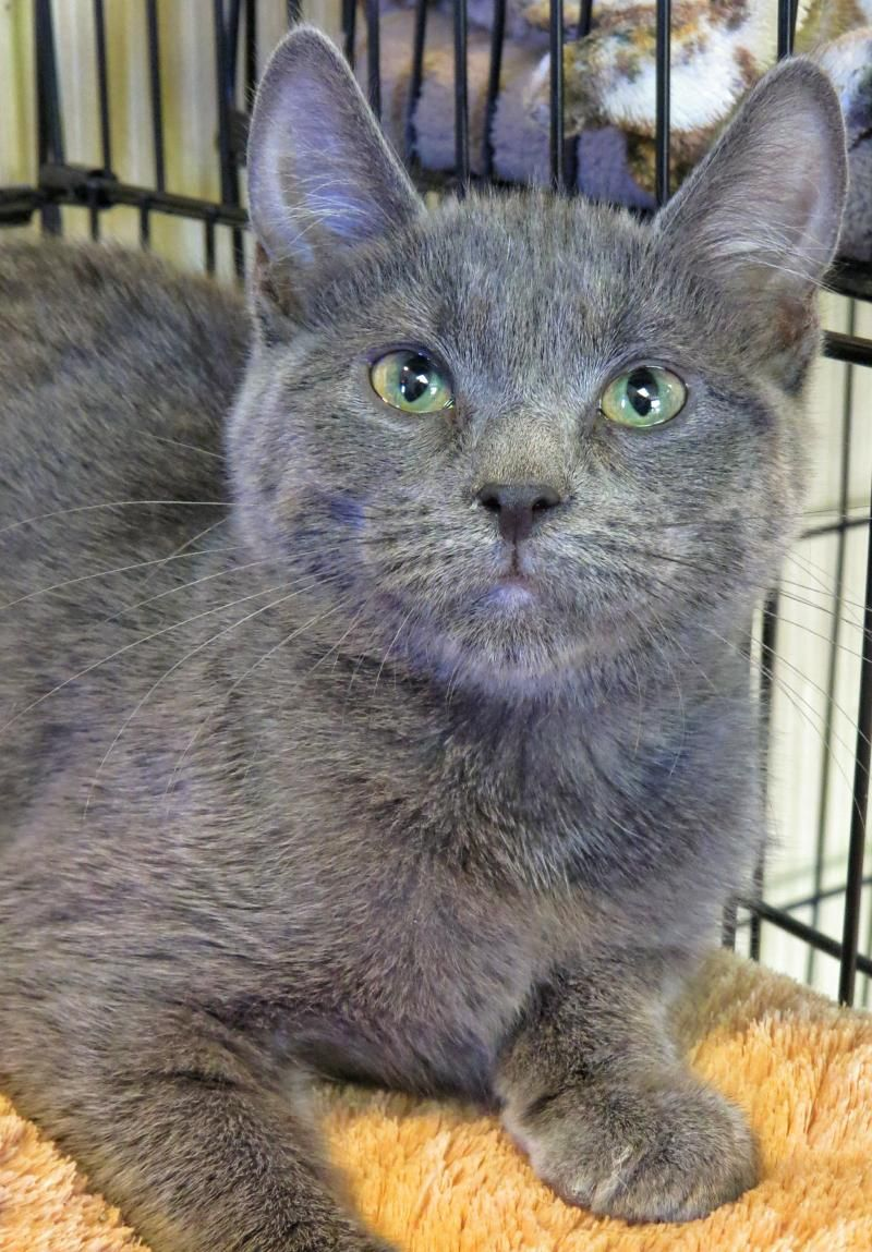 Adopt 7570 Quigley on Animal shelter, Cats, Cute cats