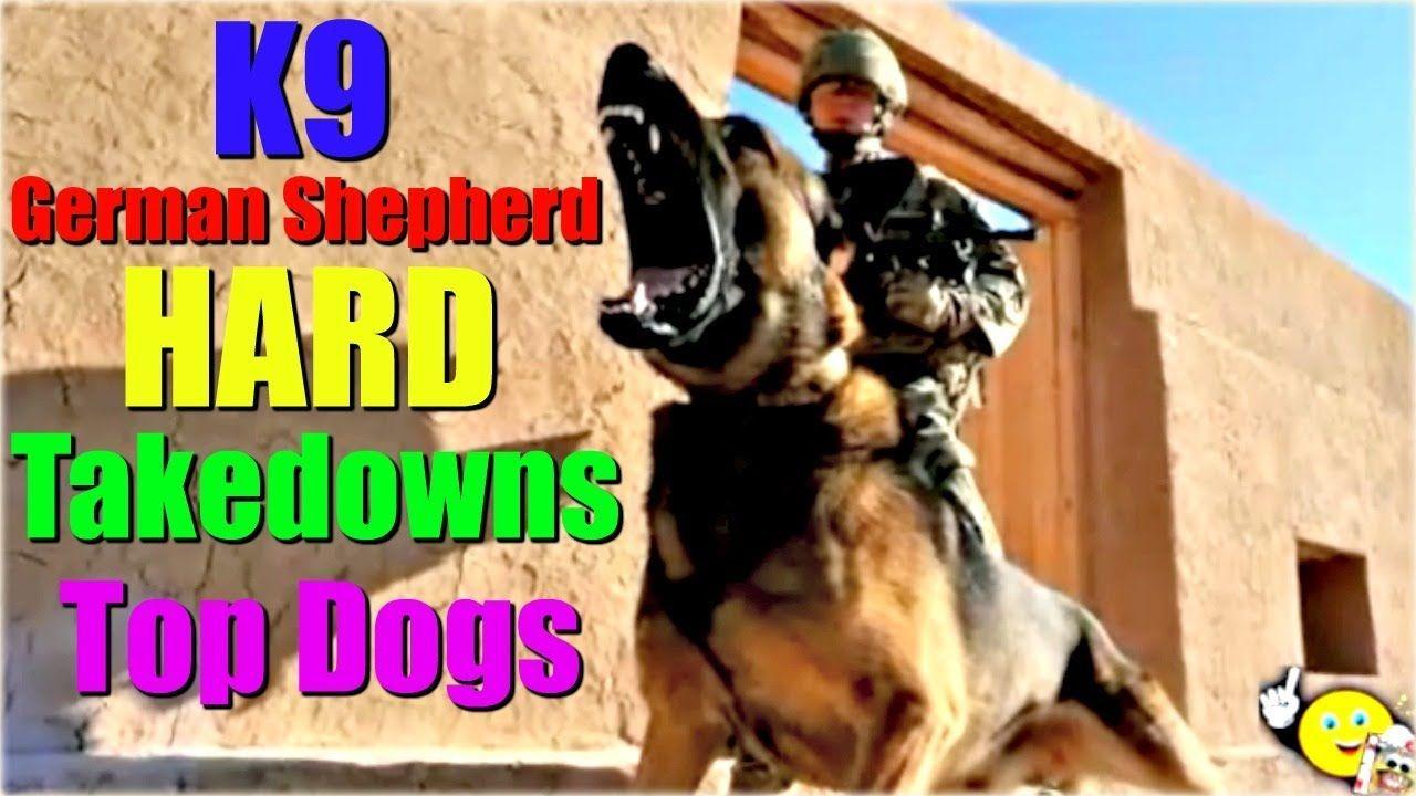 K9 Hard Takedowns Police Dogs Compilation CALI FUNNY