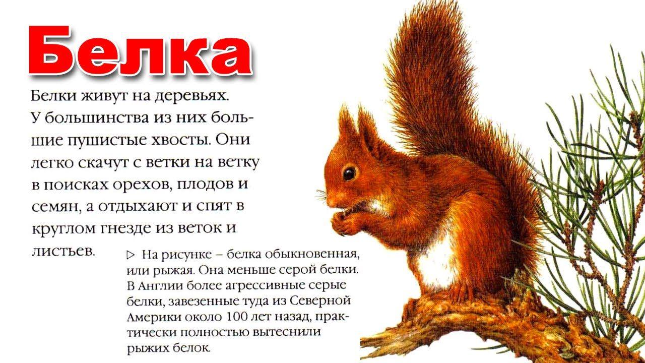Описание животных с картинкой