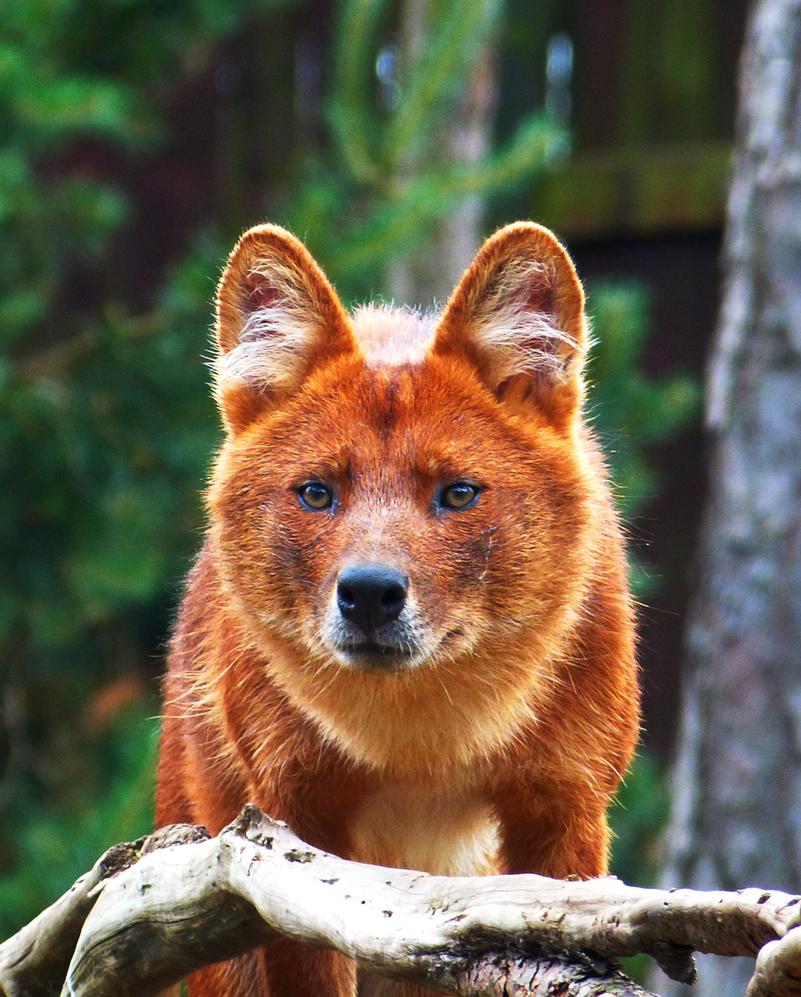 Картинки красивых животных россии
