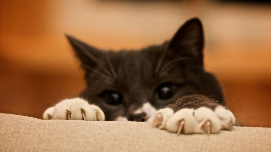 5 Ways To Protect Your Furniture From Cat Scratching ... From PetsLady.com  ... The FUN Site For Animal Lovers