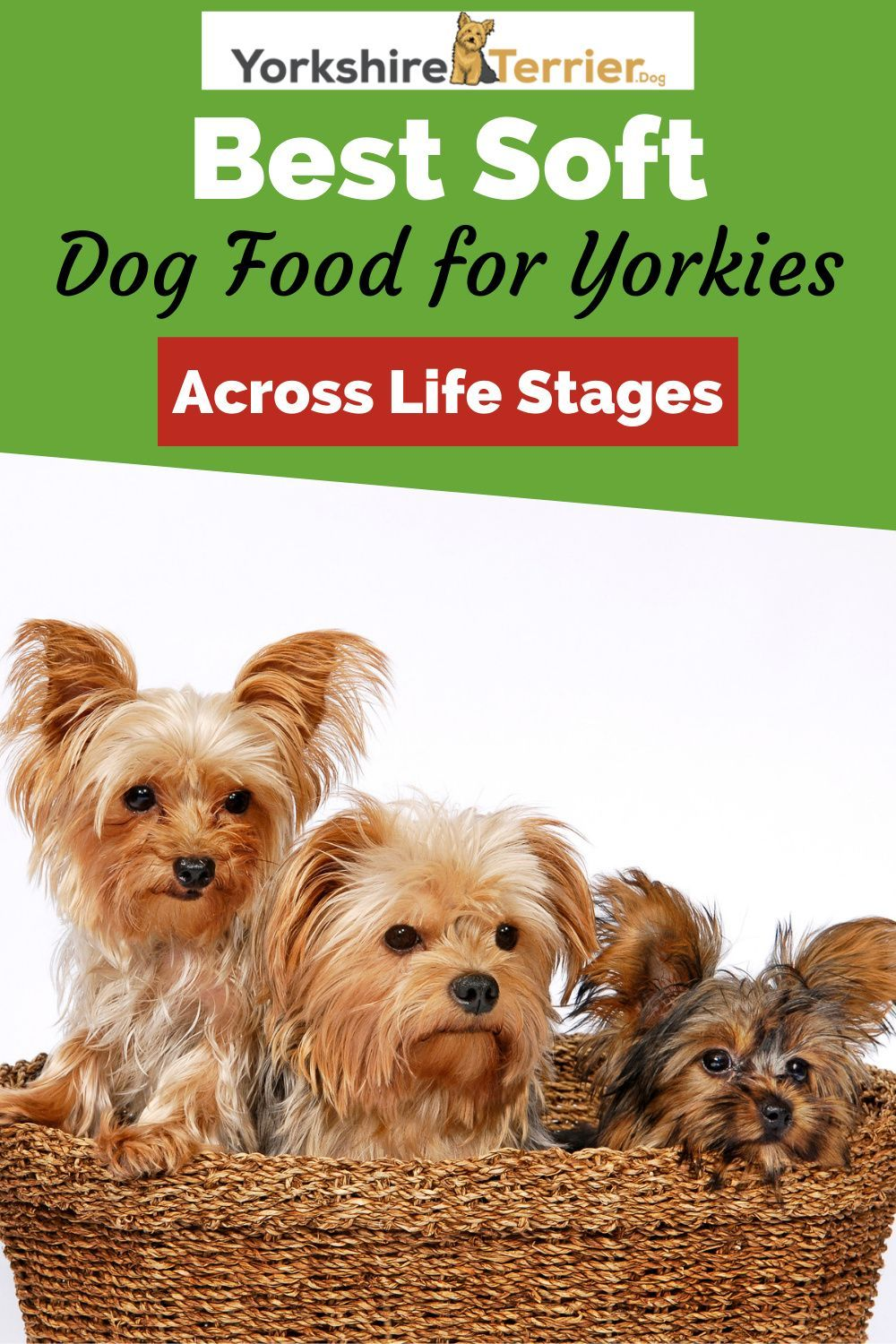 5 Best Soft Dog Food For Yorkies Across Life Stages Dog Food Recipes Best Dog Food Wet Dog Food