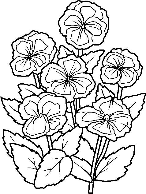 Fleurs 005 Jpg 477 631 Flower Coloring Pages Coloring Pages