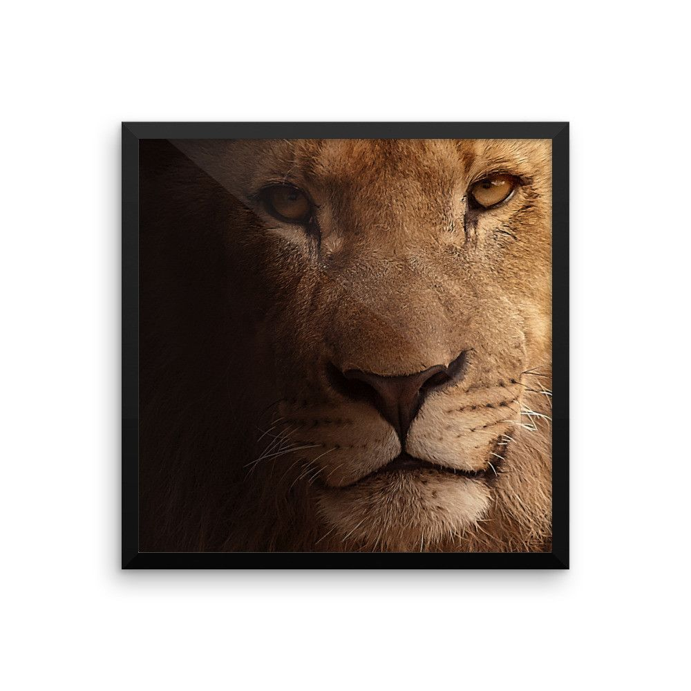 Lion Framed Photo Print