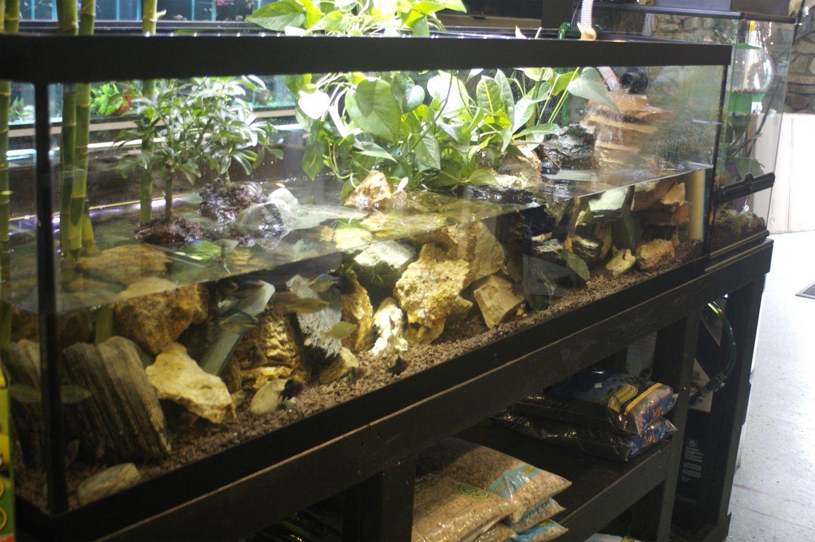 Planted vivarium fishies pinterest vivarium and aquariums