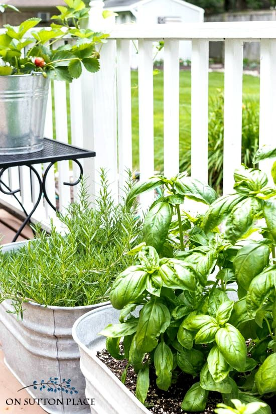 Container gardening ve ables