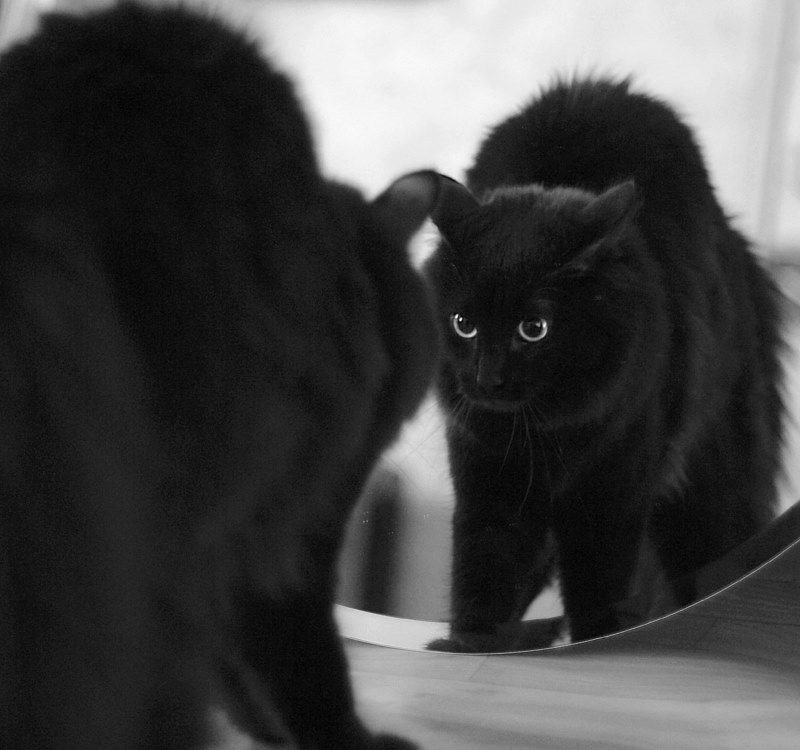 Cat and mirror