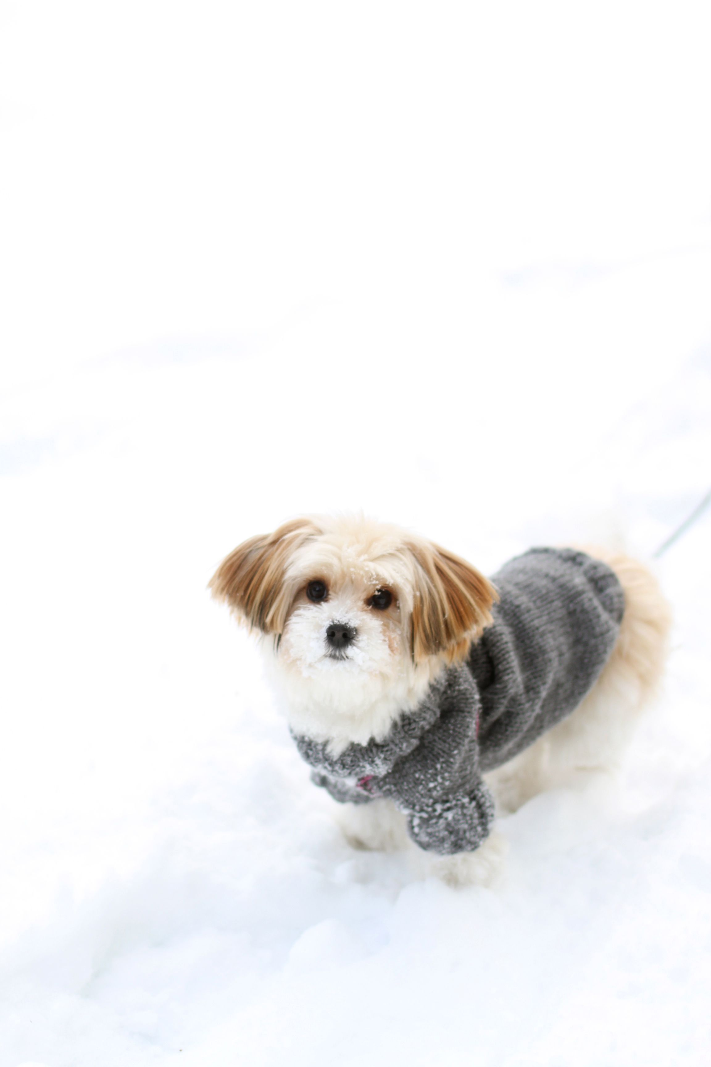 Free pattern for dog sweater - it could not be easier www.kretido ...