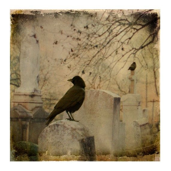 Ravens Image, Wildlife , Faded light, distressed, altered