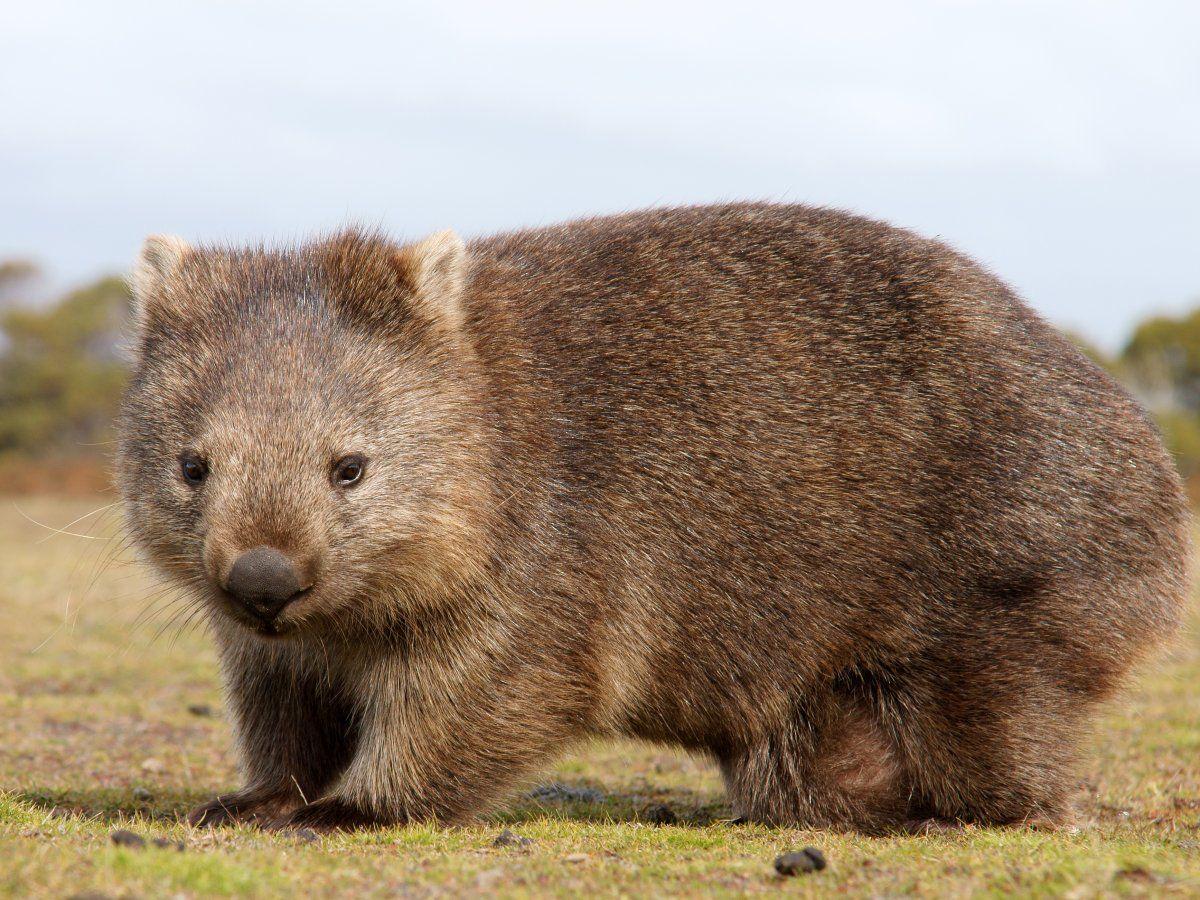The 20 Cutest Wild Animals On Earth Cute Wild Animals Cutest