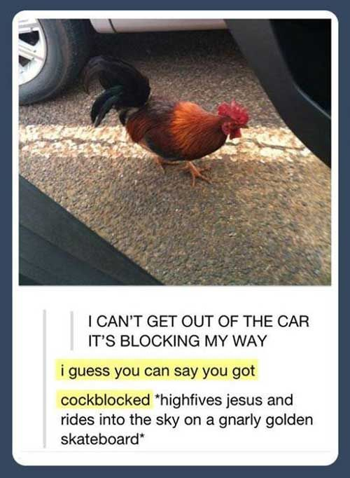 20 Great Tumblr comments