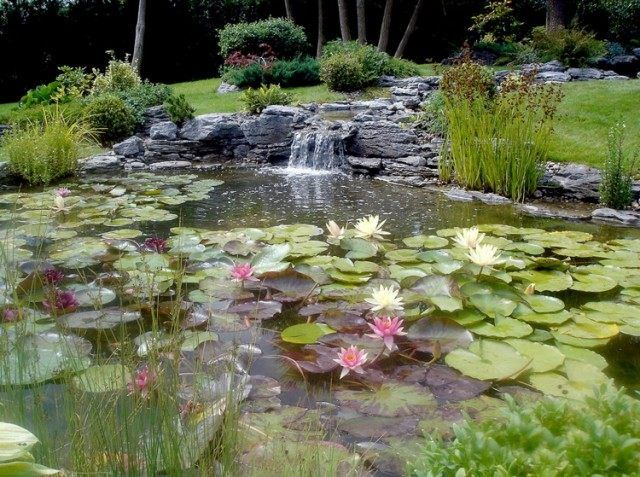 Cascade bassin de jardin- 27 idées créer votre havre de paix Water