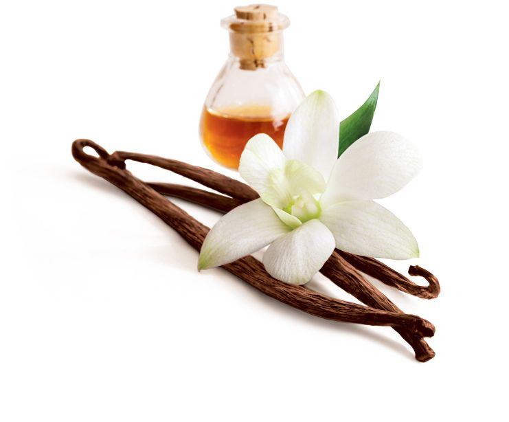 Image result for premium vanilla seed