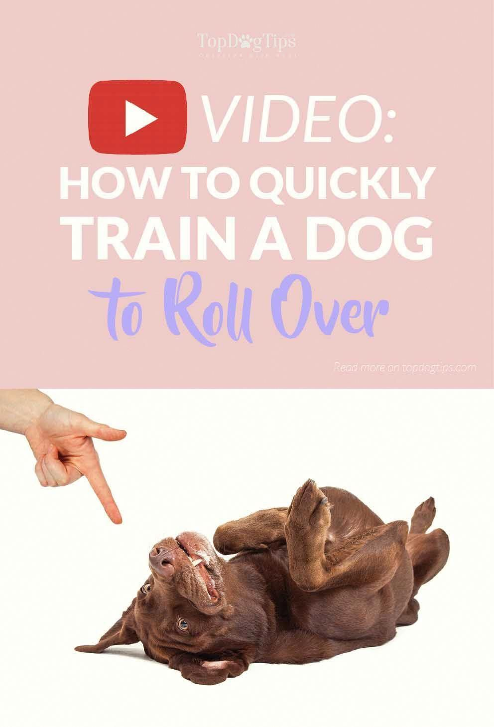 How to train a dog to roll over a quick video guide