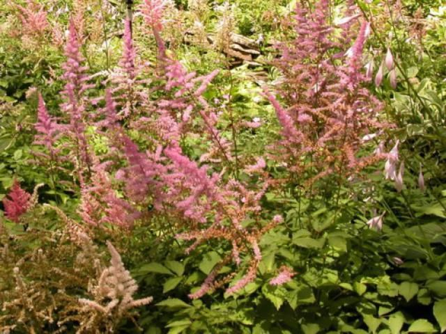 11 Excellent Flowering Perennials For Your Shade Garden Shade Garden Plants