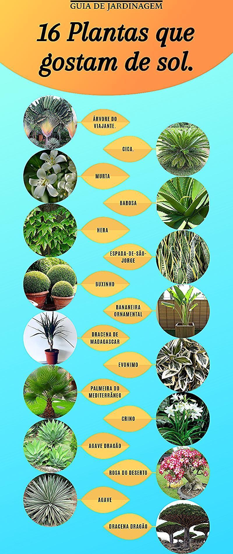 16 plantes qui aiment le soleil et laissent votre jardin en 2020 | Plantes qui aiment le soleil ...
