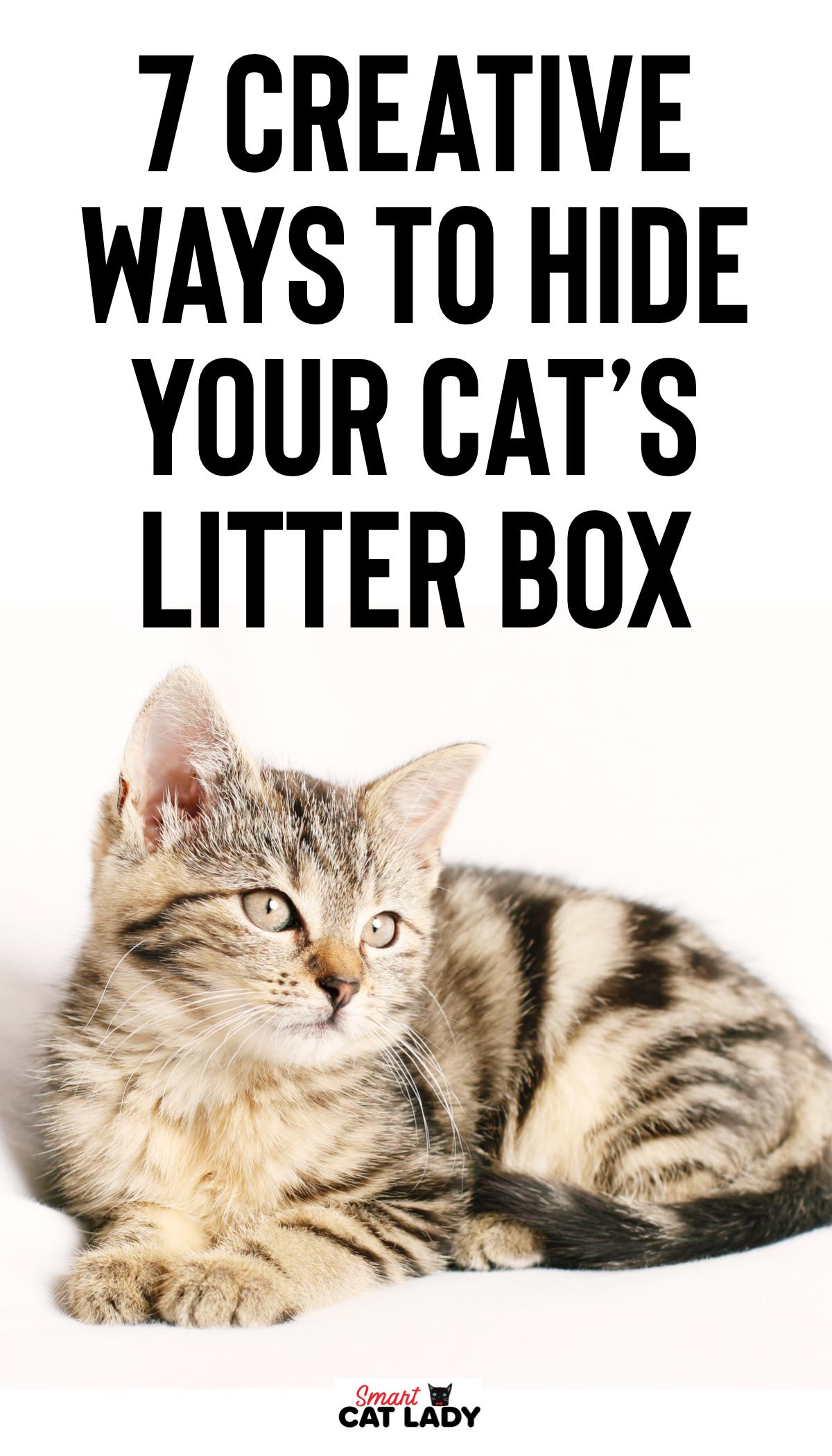 7 Creative Ways To Hide Your Cats Litter Box Cat litter