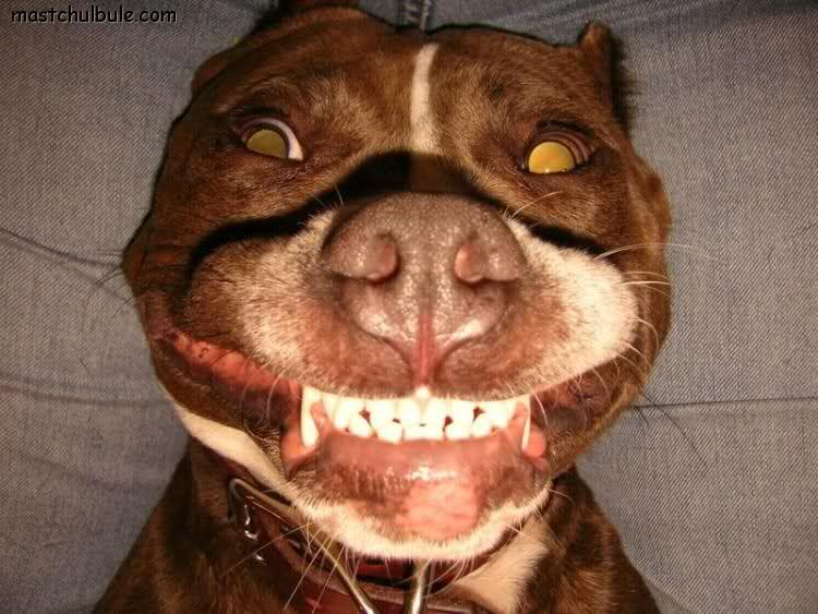 30 Happiest Animals In The World - Laughing Animal Images. Follow us www.pinterest.com/webneel/funny-pictures
