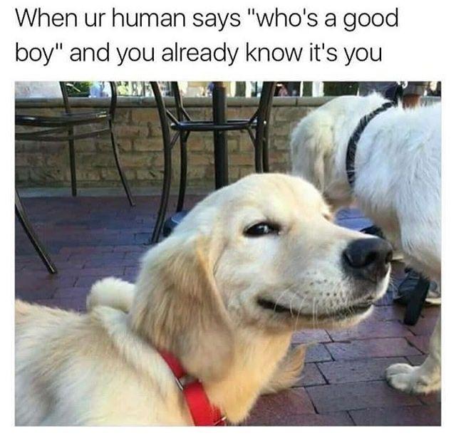 A Dump Of Dog Memes To Clear My Phone Cute Dog Memes Dog Jokes
