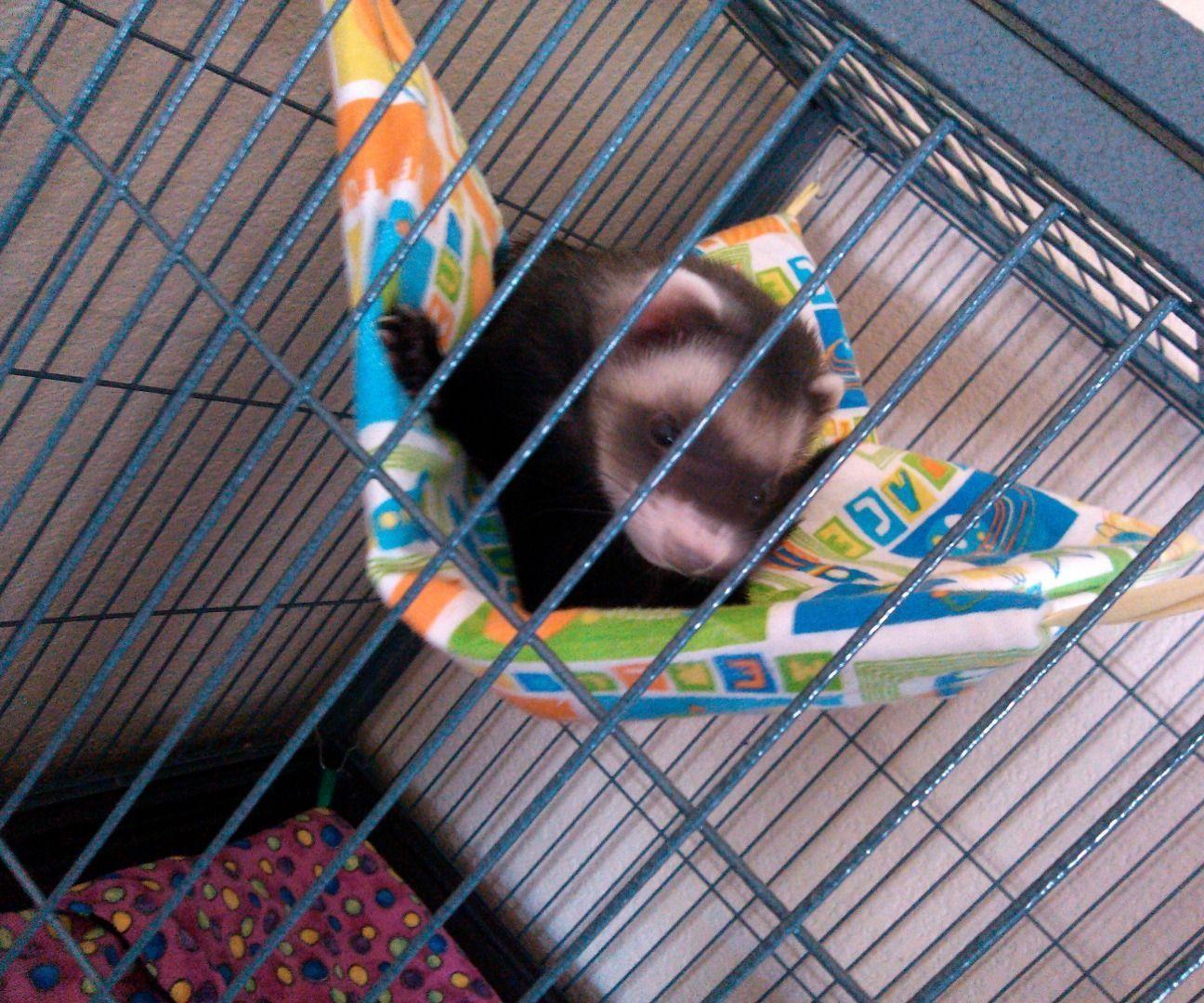 It S Hammock Time Ferret Sleepsack