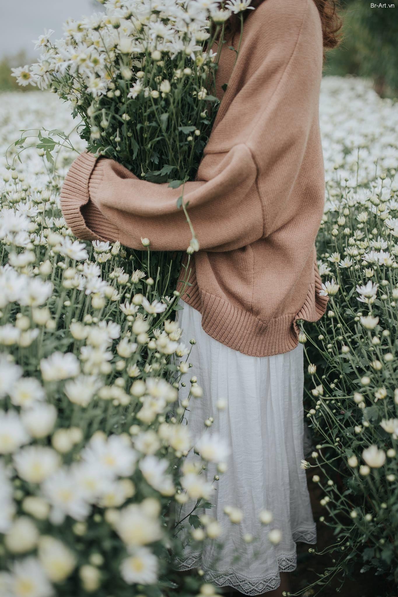 Chia sẻ preset bộ ảnh Cúc họa mi của em | Hoa cúc họa mi ...