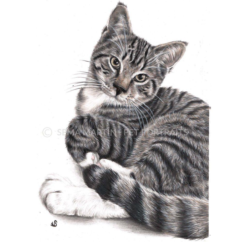 Custom Colour Pencil Cat Portrait Of A Tabby Cat By Award Winning Artist Sema Martin Tabby Cat Tabby Cat Art Tabby Ca Tabby Cat Cat Portraits Pet Portraits