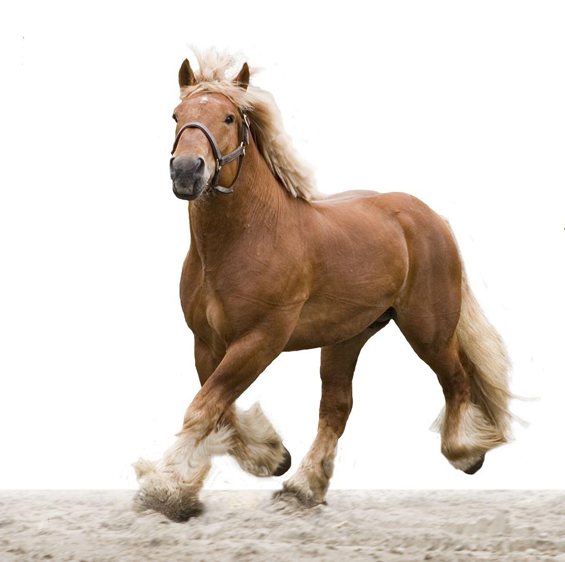 Title Here In 2020 Belgische Trekpaarden Trekpaarden Paarden