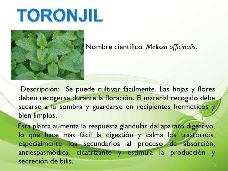 plantas medicinales su nombre cientifico y pregnancy que sirven