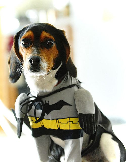 Beagle Batman Costume Cute Batman Dog Costume Dog