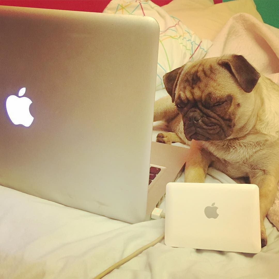 Trying Hard Not To Fall Asleep While Instagramming #tired #sleepy #pug  #puppy