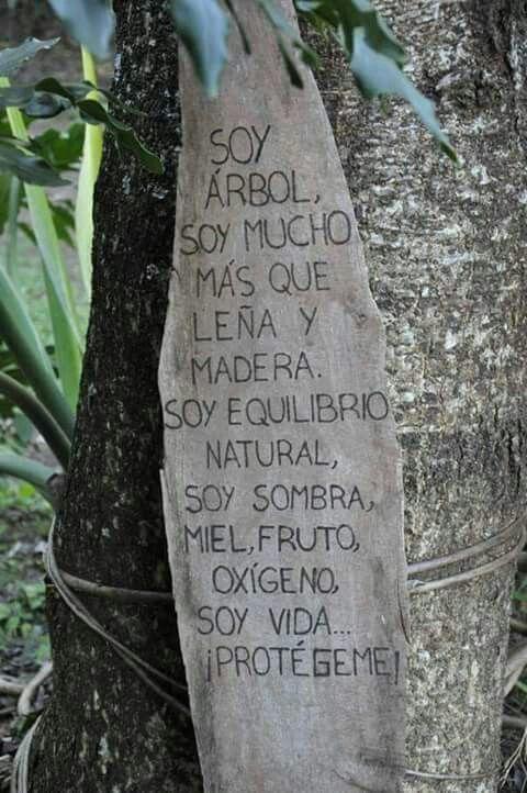 Debemos cuidar el medio ambiente #consciencia