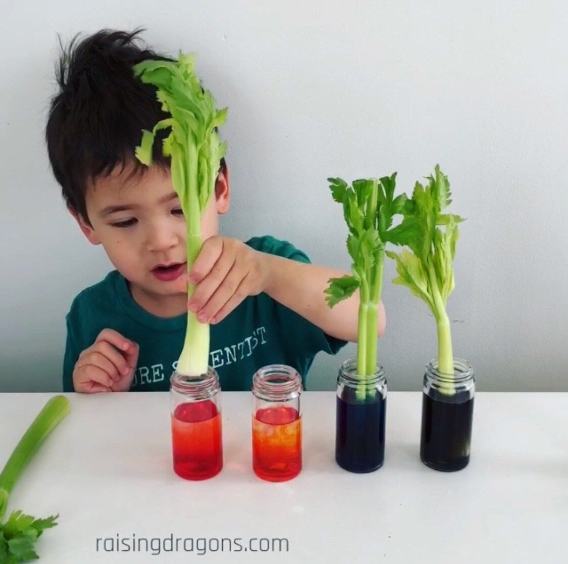 Celery Science Experiment Transpiration* ages 3