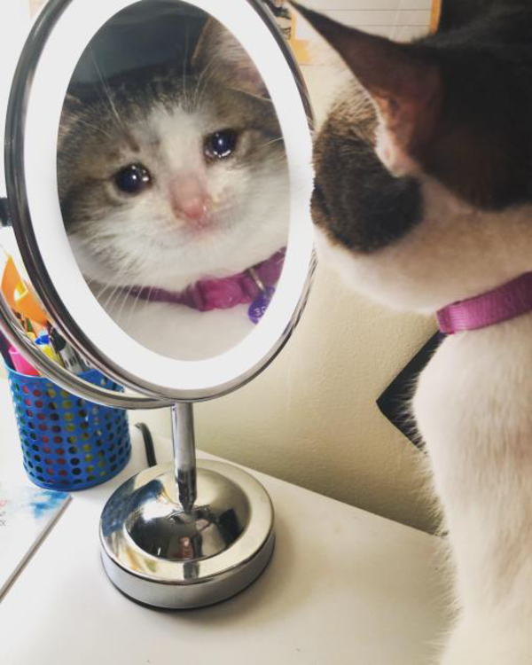 Who S The Saddest Of Them All Crying Cat In 2021 Cats Cat Memes Cute Cats