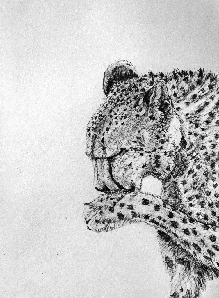 Pencil Art Black And White Drawing