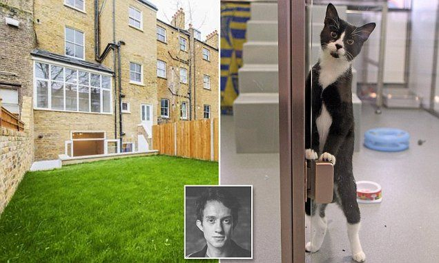 Animal lover not allowed pet cat because it doesn't have
