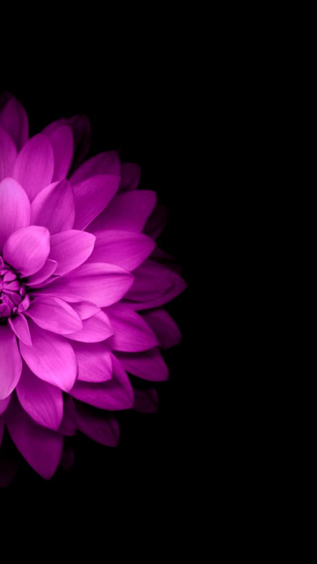 Pink Flower Black Background Wallpaper Smartphone Wallpaper Flower Wallpaper