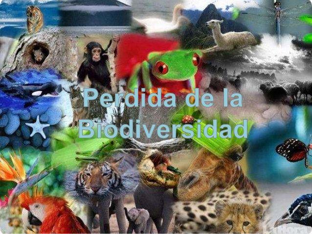 Extincion Y Perdida De Especias Animales Y Plantas En Http Www Temasambientales Com 2017 03 Perdi Perdida De Biodiversidad Extincion En Peligro De Extincion