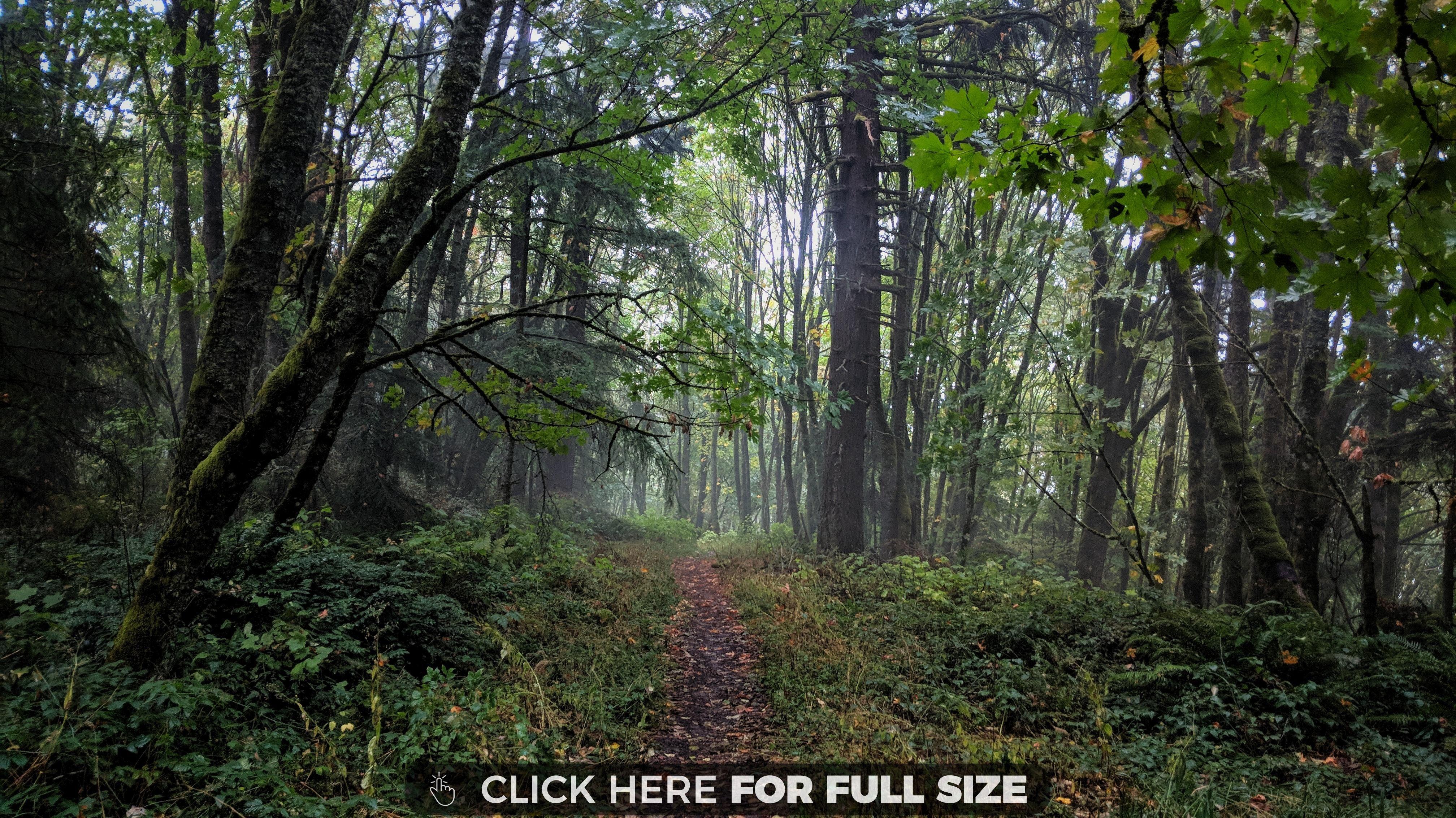 Forest Park. Oregon wallpaper Forest park oregon, Forest