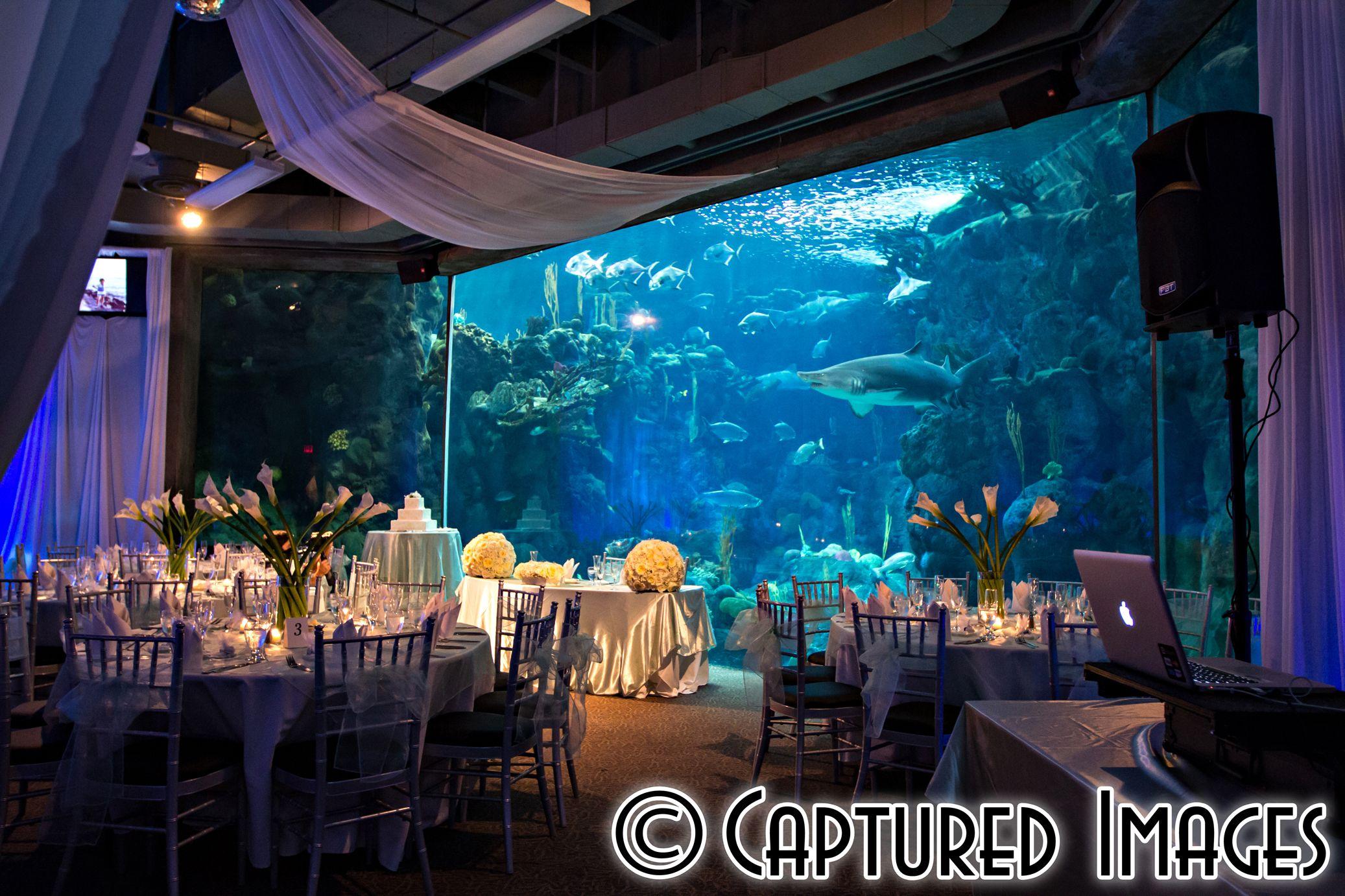 Florida Beach Wedding With Aquarium Reception: Aquarium Wedding Reception