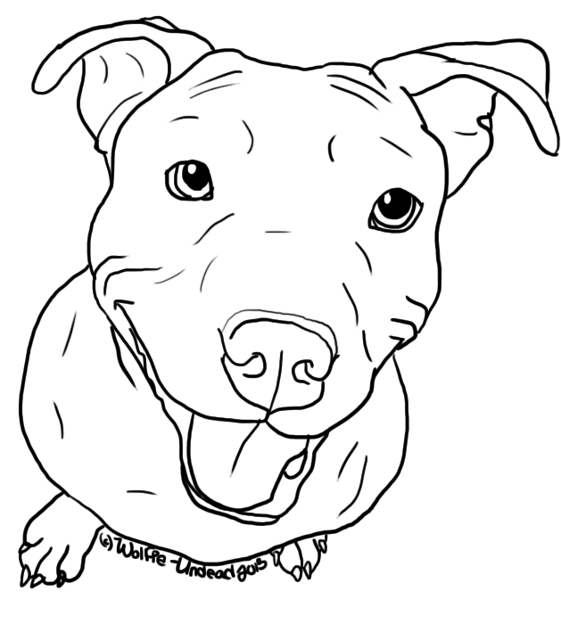 Line Drawing Of A Dog S Face : Free pit bull line art by wolfie undead dog stencils