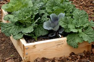 Getting a late start on your Spring garden planning? Use one of our raised bed kits and you're good to go- no tilling or heavy labor necessary! http://www.farmerd.com/product/raised_bed_10in/farmer_d_signature_products