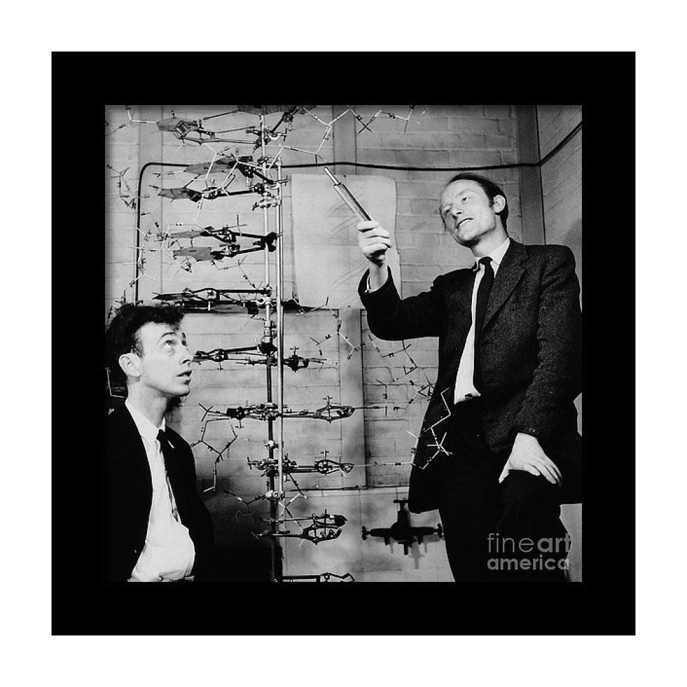 Watson And Crick With Dna Model Framed Print By A Barrington Brown Dna Model James Watson Dna History