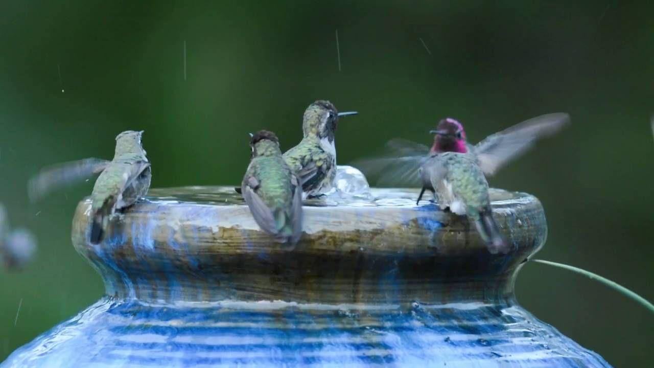 Hummingbird bath! (With images) Bird baths homemade