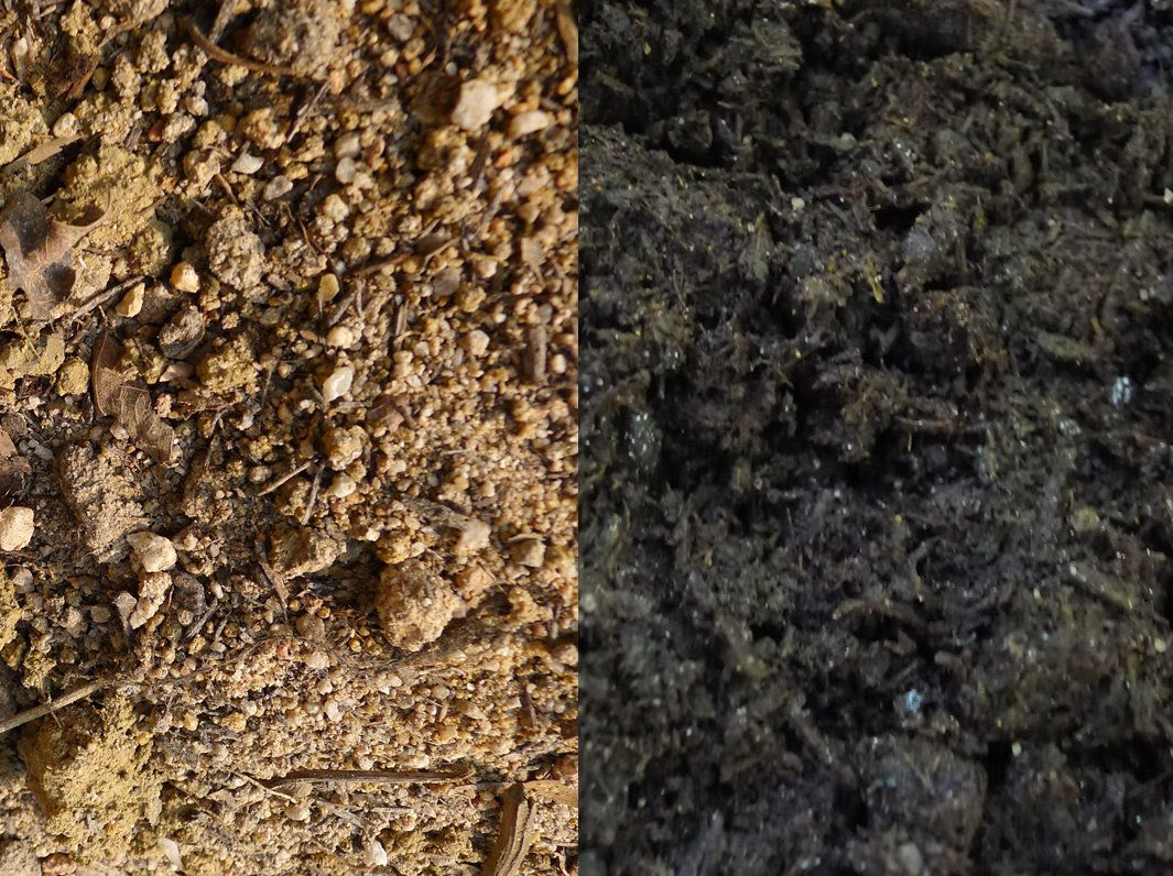 SOIL STERILIZATION: You can revitalise and reuse old potting mix by ...