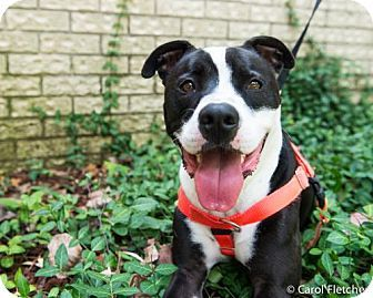 Pin On Adopt Rescue