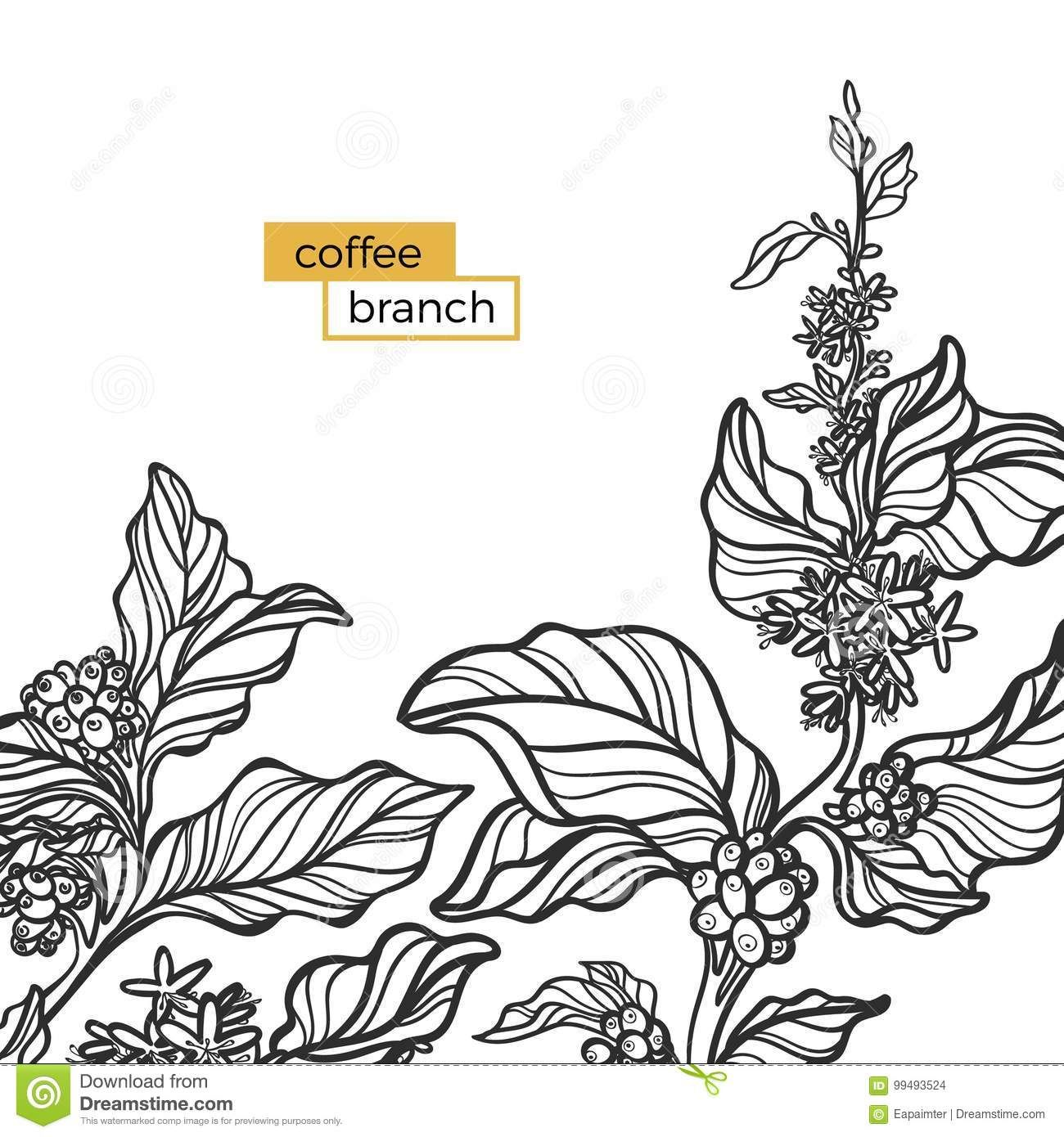 Template Of Black Branch Of Coffee Tree With Leaves And